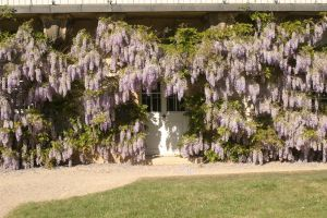 Door with wisteria 1 by almudena-stock