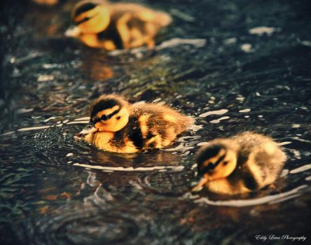 Band of Brothers II by MyLifeThroughTheLens