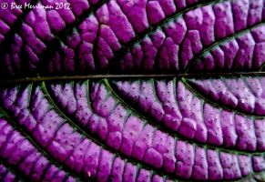 Purple Leaf by BreeSpawn