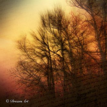 The Light That Falls Among The Trees... I by Dreamart