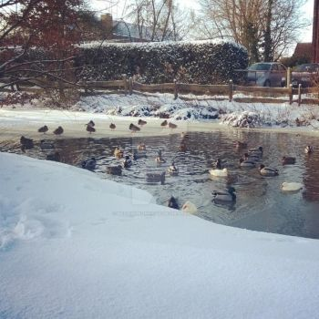 Ducks Part Two 03 by Beziehunqsweise