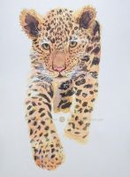 Baby Leopard by LuciaLemos