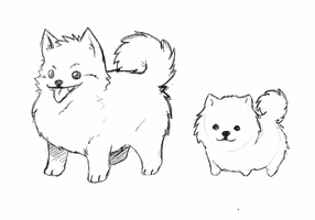 Pomeranian sketches by rongs1234