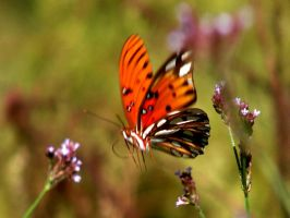 Butterfly Dream by Sharondipity