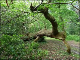 Tree Crawling Out Of The Forest by Estruda