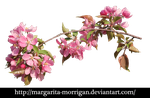 flowering branch 1 by margarita-morrigan