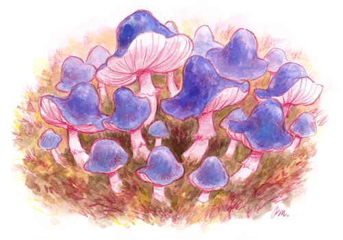 Mushrooms by PaulaMela