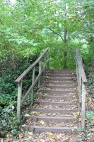 Steps by ditney
