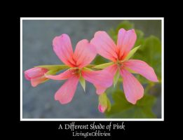 A Different Shade of Pink by livinginoblivion