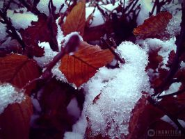 Photogallery 2014 - 01 snow by Ingnition