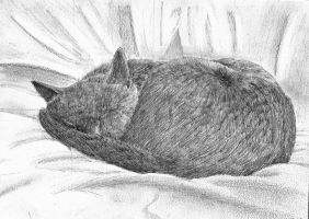 Sleeping Soundly by Meorow