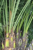00090 - Palm Stalks with Needles by emstock