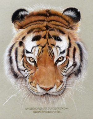 Tiger Drawing by AmBr0
