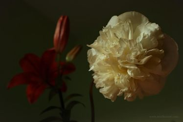 Red Lily and White Peonia by wiebkerost