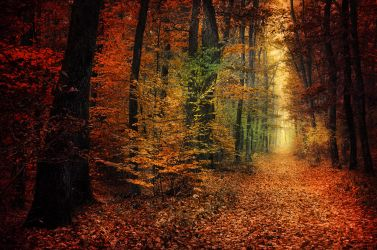 Autumn Walk XXXIV. by realityDream