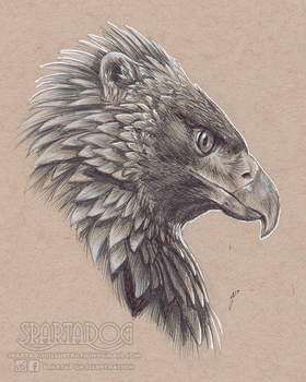 Golden Gryphon by AlexJacob
