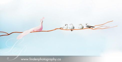 Dare to Be Different by lindenphotography
