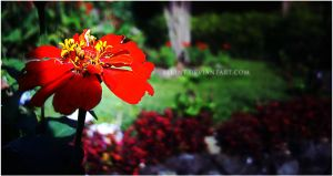 Flowers of Baguio 3 by fllint
