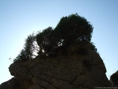 The Rock and the Bush by the4ce