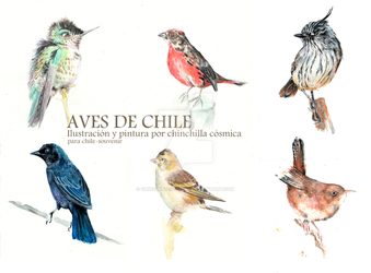 Aves de chile I by chinchillacosmica