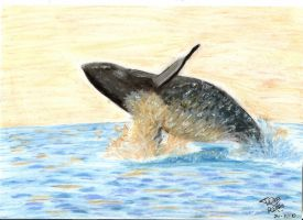 Jumping Whale by TessJa