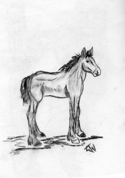 Shire Colt by shunnedbeliefs