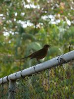 The bird on the fence by crisisnyc