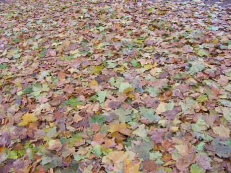 Autumn Leaves Stock by MDFS by Mrs-Dani-Filth-Stock