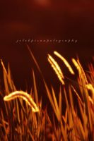 golden place at SIS bdg 2 by jelekpisanpotography