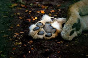 Paws by jeffdkennel