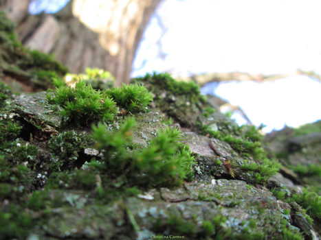 Mossy Treetrunk by Miounz