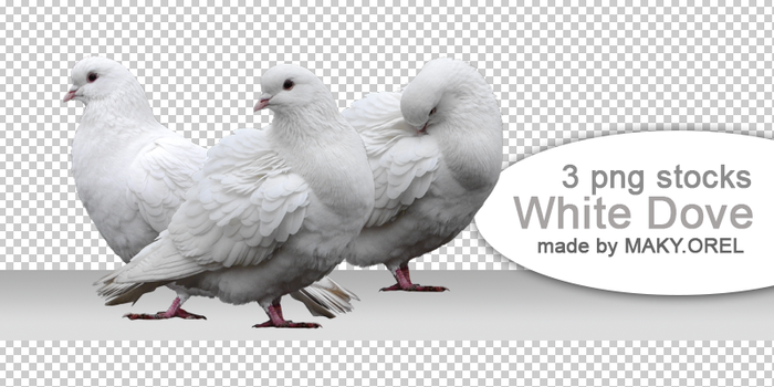 PNG (pre-cut) STOCK: White dove by MAKY-OREL