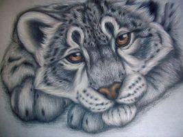 Snow Leopard Study 2012 by SaltyPuppy