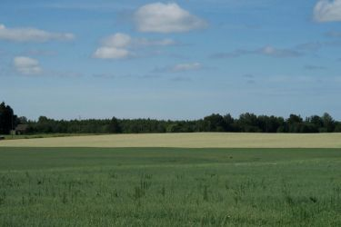 Landscape in summer 108 by MASYON