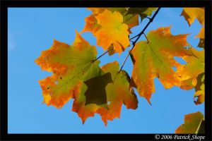 Turning Leafs on a Fall Day by pshope