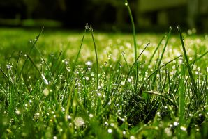Morning dew by Meireis