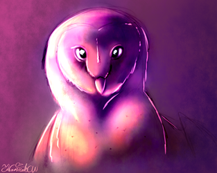 Barn Owl by FanaticPanda