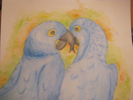 Hyacinth Macaw by Feufeu1914