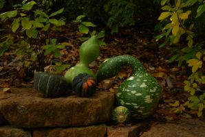 Couple O' Gourds Stock 1 by redwolf518stock