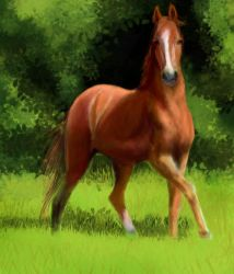 Red Horse by Joava