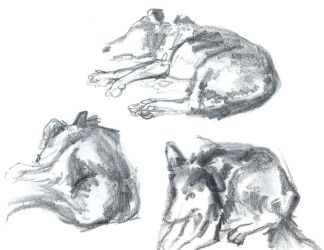 Dogs Sketches by Arkanth
