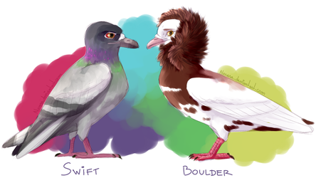 Pigeons color ref #1 by Norara
