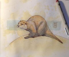 Daily Watercolor animal Sketch: Otter by RM-WINCH