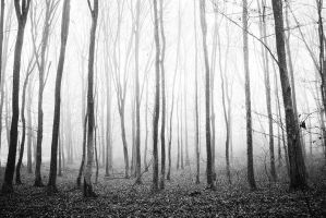 Forest 4 by grini