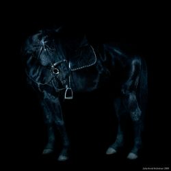The Horse by immanuel