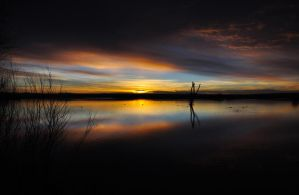 Sunrise at the Bosque by jaredgiese