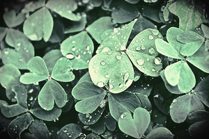 Lucky drop by lallirrr-photography