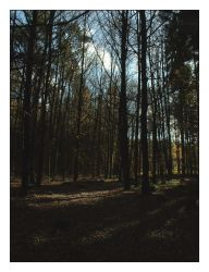 Autumn in the Woods 3 by addigdifworld