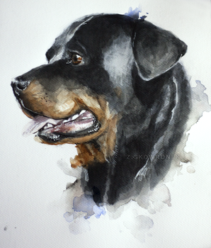 Rott watercolor by Hedax