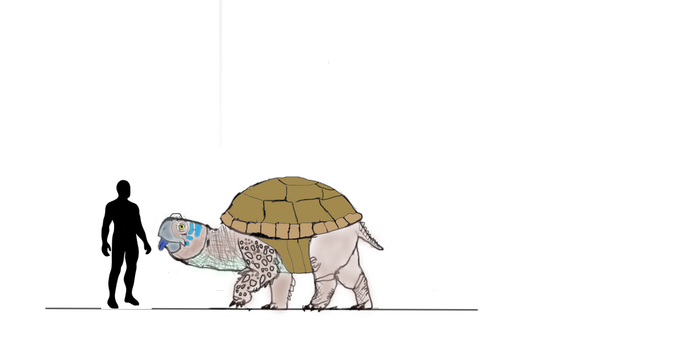Big heckin' turtle mount by drogonnite